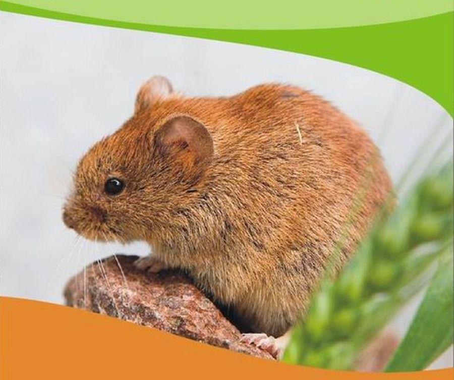 Перезимовать без «мышиной» лихорадки: что поможет избежать заражения ГЛПС?