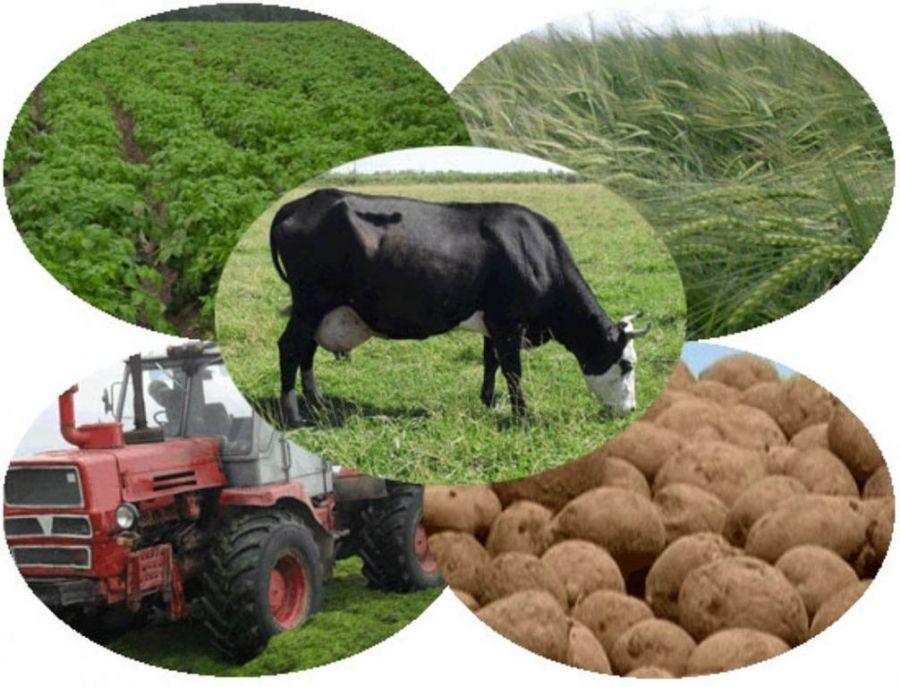 Проведение выборочного наблюдения за сельскохозяйственной деятельностью граждан
